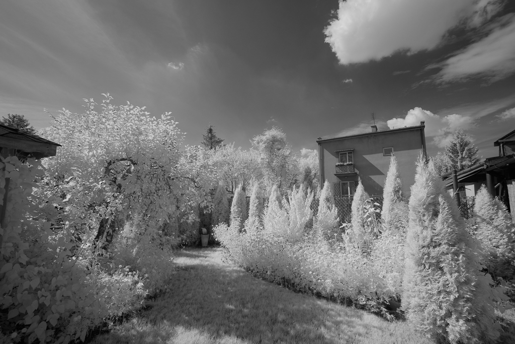 Picture direct from the X-T1 IR, in the black and white mode